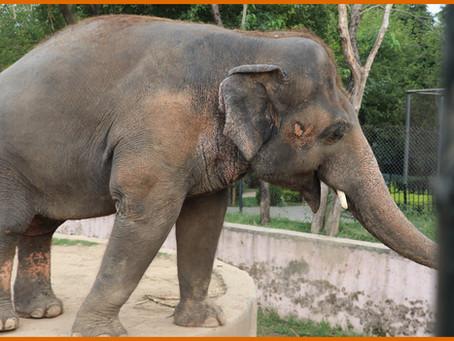 Kaavan Set To Retire To Cambodian Elephant Sanctuary.