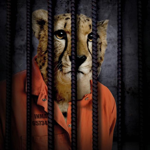 Free The Wild - Cheetah