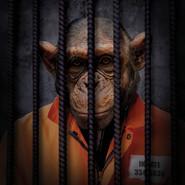 Free The Wild - Chimpanzee