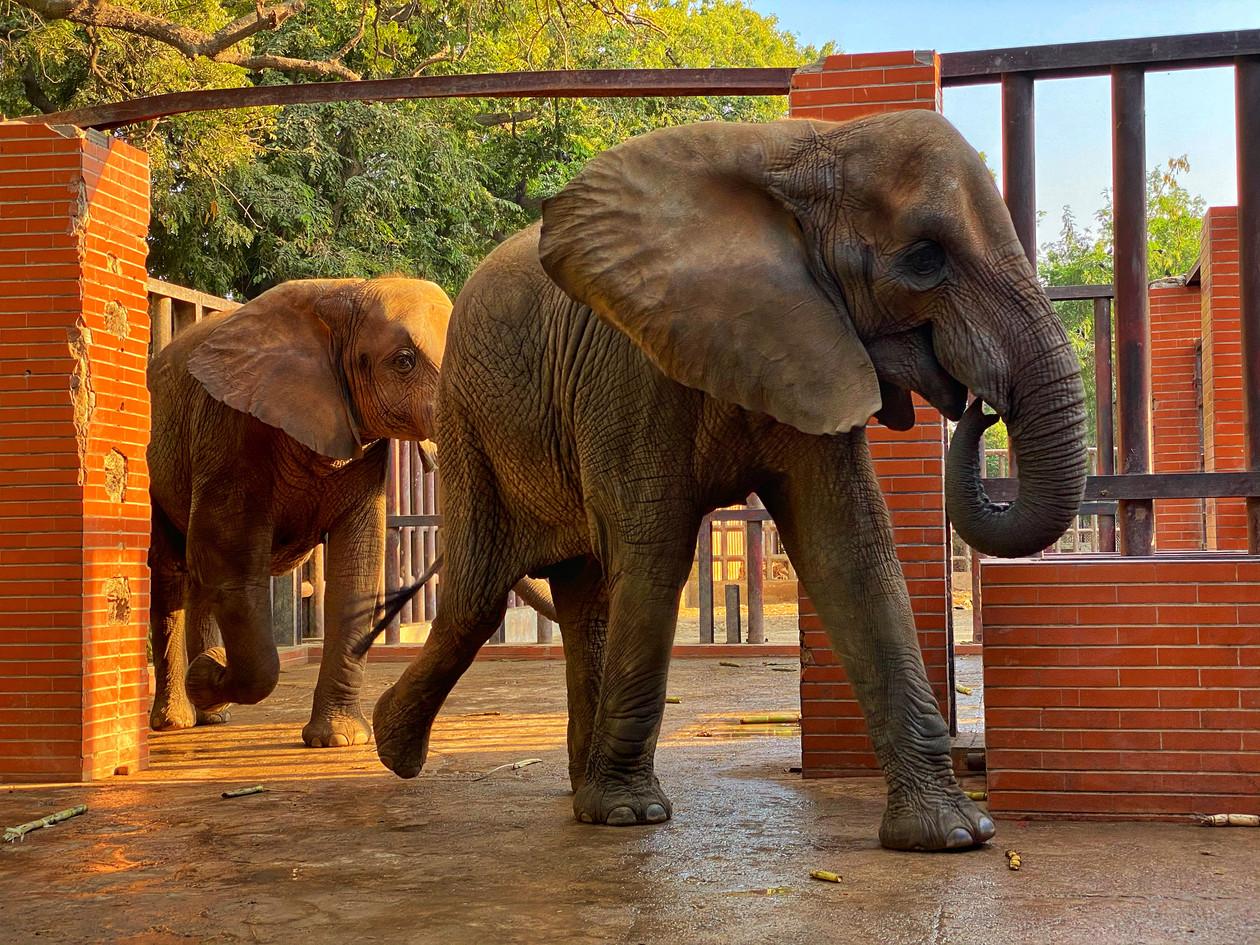 karachi zoo 2020.jpg