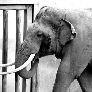 Billy the elephant.jpg