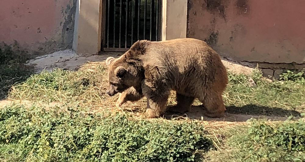 Brown Bear Dies at Islamabad Zoo