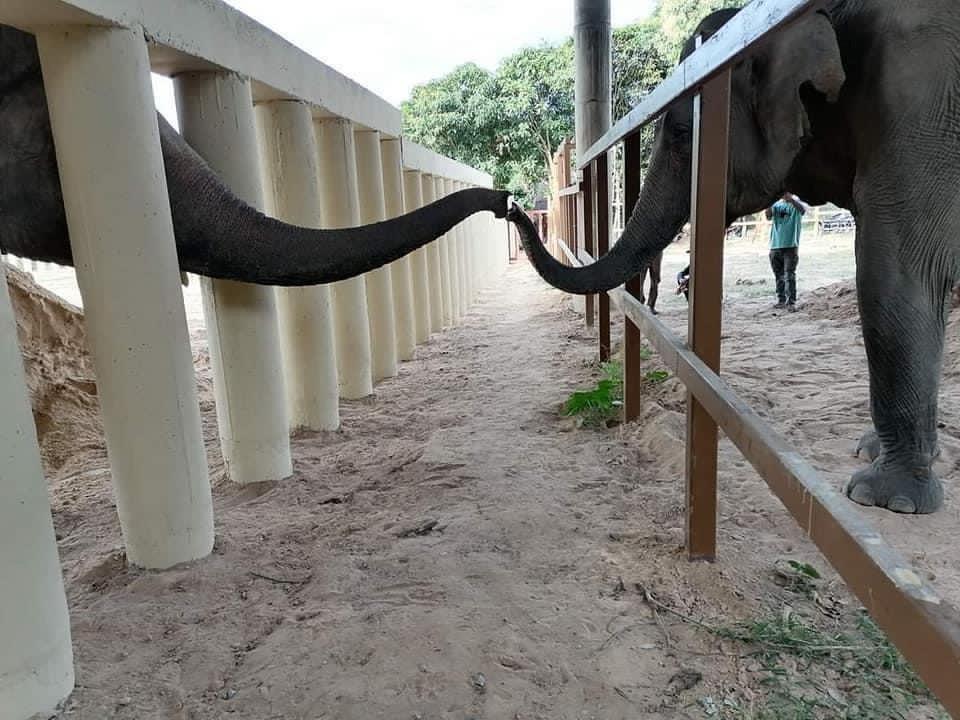 Kaavan meets his neighbour