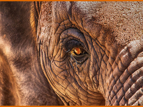 Our Petition to Stop Elephant Imports to Pakistan