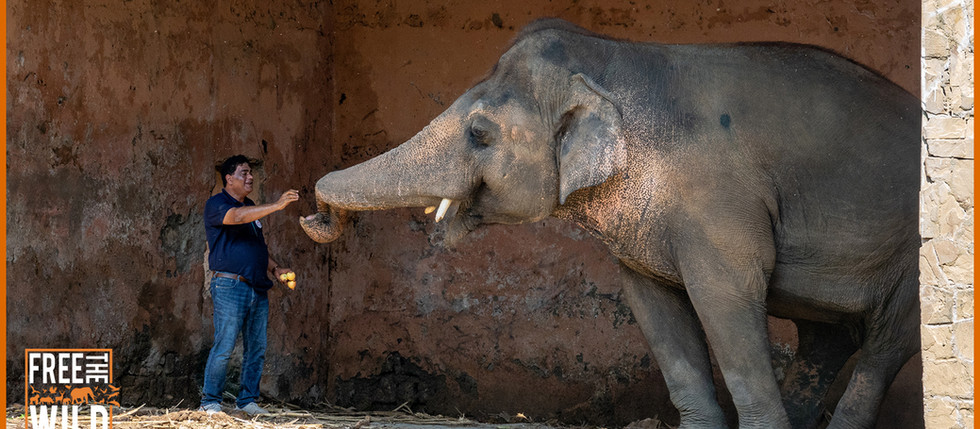 URGENT: The last few steps for Kaavan's freedom but now we need your help!