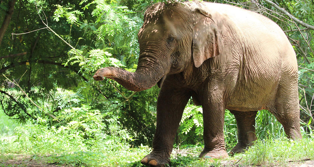 Lek's Sanctuary in Cambodia willing to help FTW