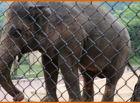 Helping Kaavan - The Unembellished Timeline Continued
