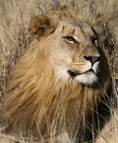 lion-ftw-header-optimised.jpg