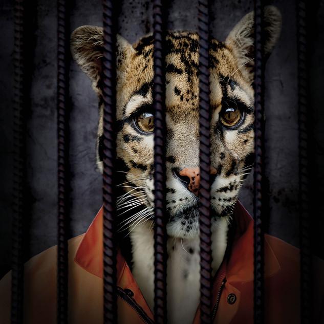 Free The Wild - Jaguar
