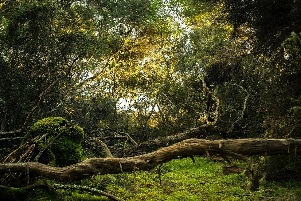 Jungle-Background.jpg