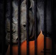 Free The Wild - Rhino