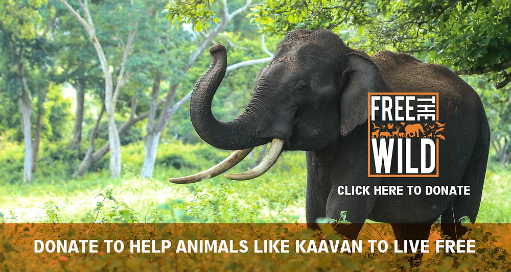 Please donate - Kaavan needs your help