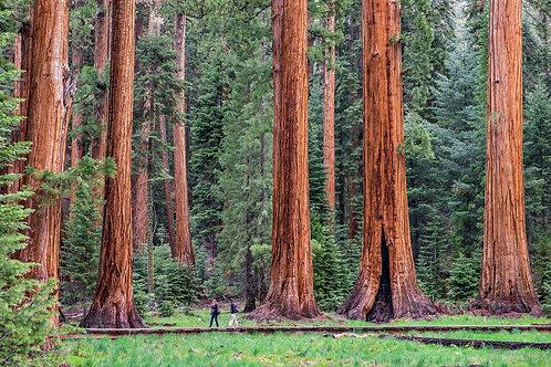 Pernottamento tra le Sequoie Giganti