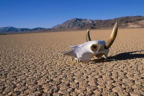 Gita di un giorno a Death Valley
