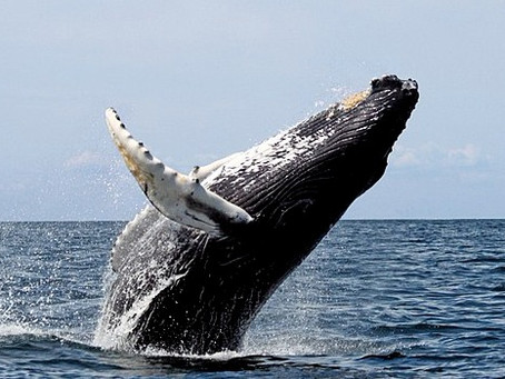 Whale whatch in USA e Canada