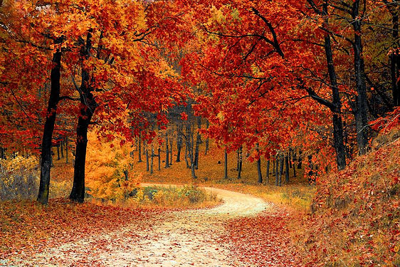 Vermont Foliage.jpg
