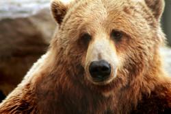 bear-2747135