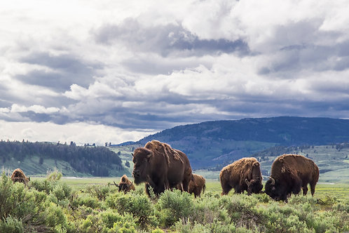 Intera giornata nella riserva di Custer