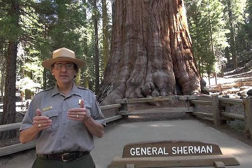 Pomeriggio tra gli alberi di Sequoia National Park