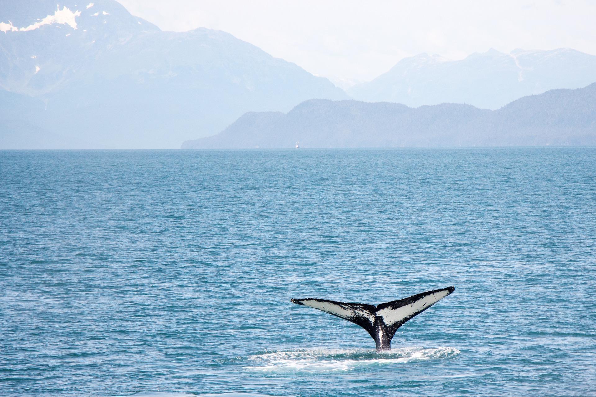 whale-4424846_1920