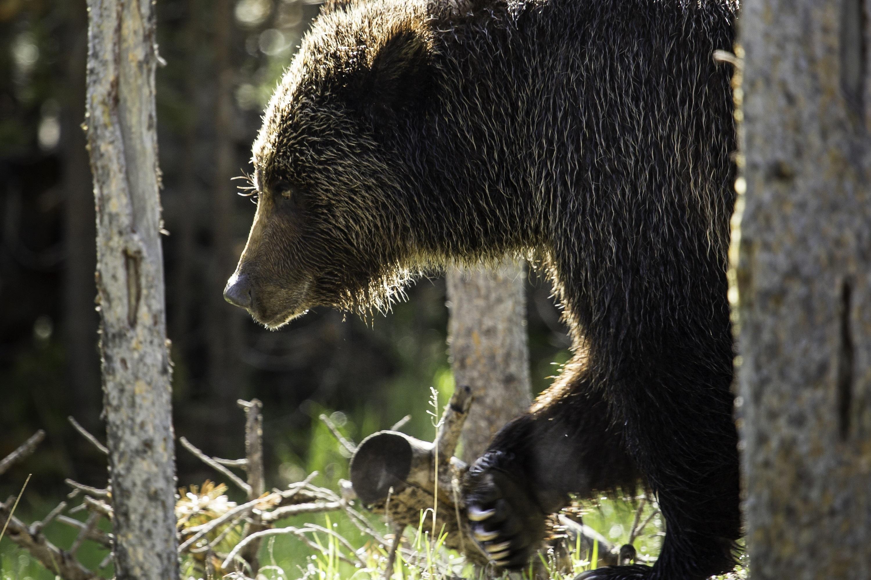 bear-3933066