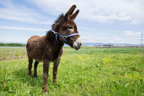 Noël the Donkey