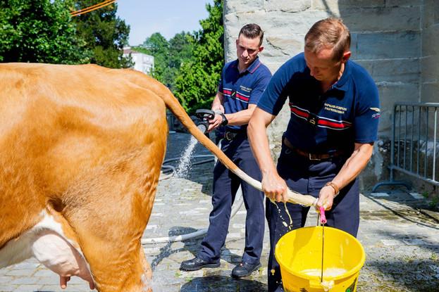 L'association élévage La Côte a amené quatre vaches au Parlement Vaudoise pour faire une surprise au nouveau président du Grand Conseil. Les sapeurs pompiers nettoyent les vaches