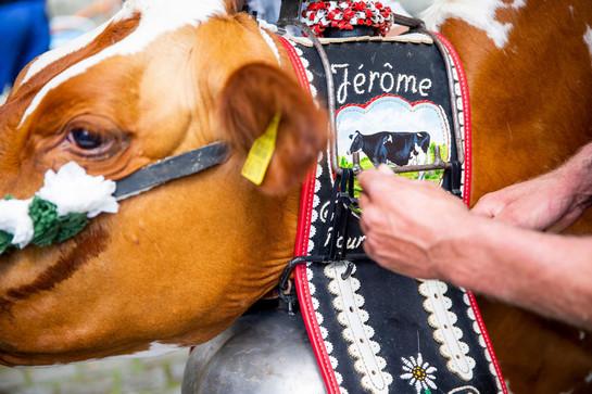 L'association élévage La Côte a amené quatre vaches au Parlement Vaudoise pour faire une surprise au nouveau président du Grand Conseil