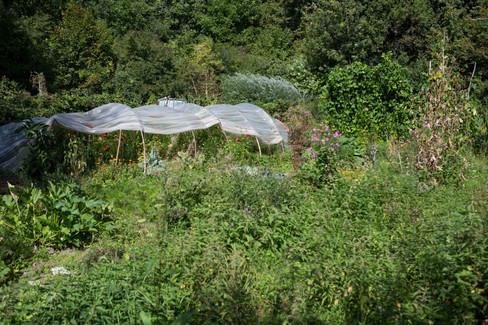 Vegetable Garden in Bois de Chênes