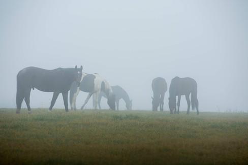 Horses in Nyon
