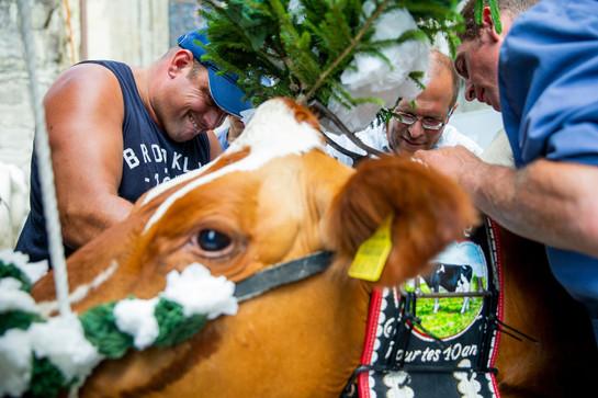 L'association élévage La Côte a amené quatre vaches au Parlement Vaudoise pour faire une surprise au nouveau président du Grand Conseil.  Jean-Claude Rohrbach, éleveur des vaches