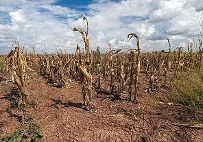 Famine-Corn.jpg