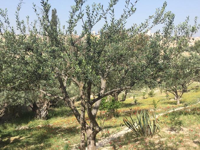 Walking in Jesus' footsteps - Gethsemane