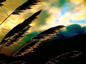 The unproductive season - fallow land