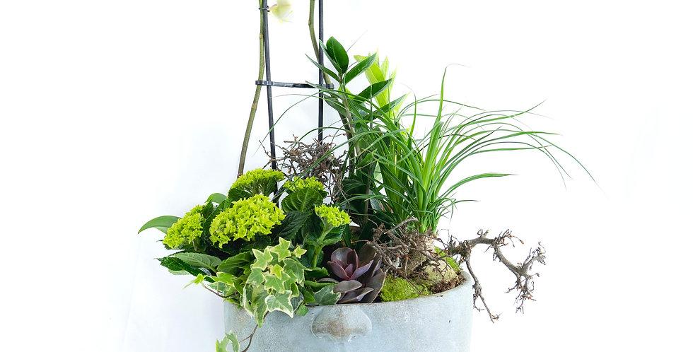 Composition de plantes intérieur