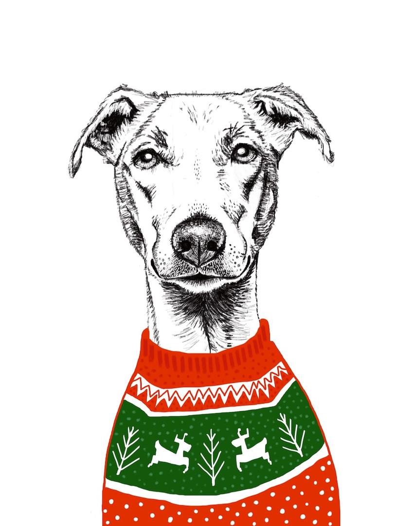 Xmas Dog in Knitwear 3