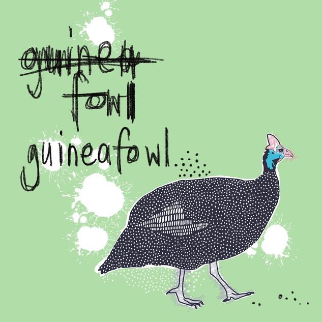Guineafowl, Cape Town