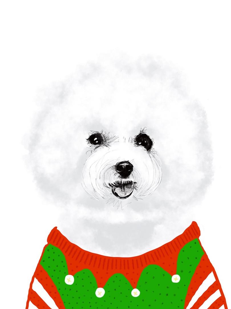 Xmas Dog in Knitwear 2