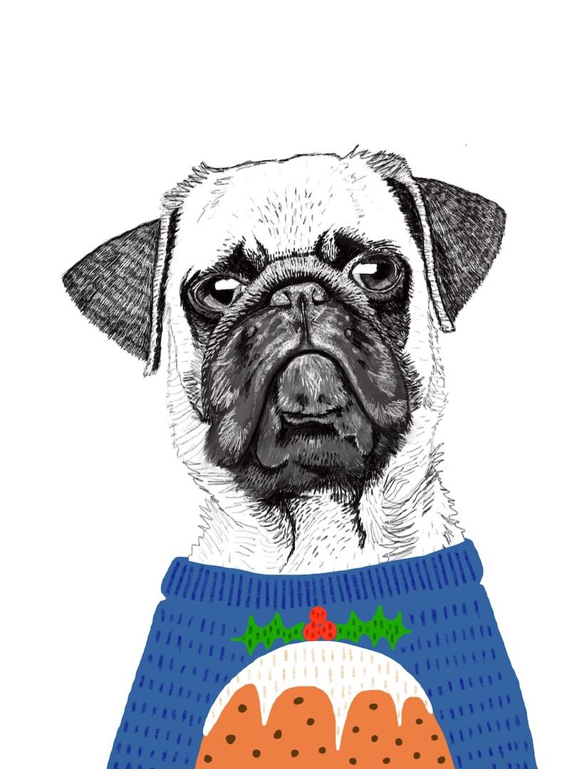 Xmas Dog in Knitwear 4
