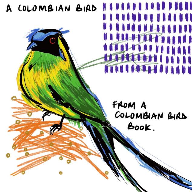 Colombian Bird