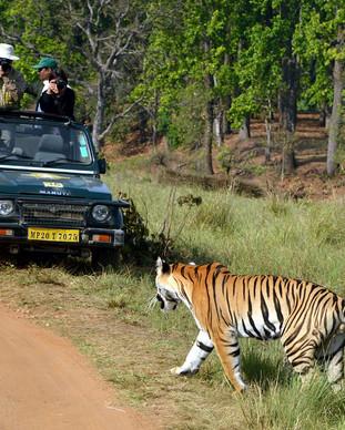 Ged Tiger Kanha 3.jpg