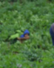 Volunteer-okhaldhunga 14 Days Link Pic.J