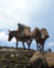 Donkeys on Tasluna Trek