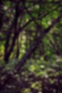 Bäume und Geäst im Prater