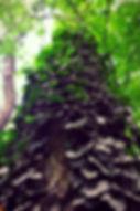 Efeu bewachsener Baum, Prater