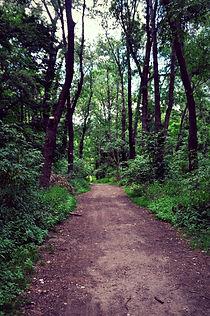 Wanderweg im Prater