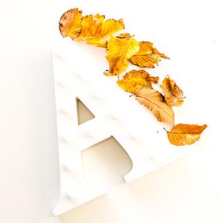 autumn instagram images-1.jpg