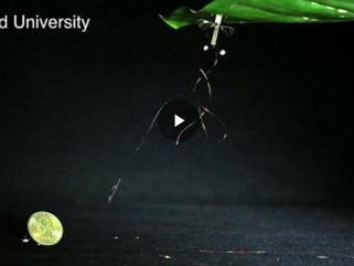 RoboBee Learns to Perch to Save Energy