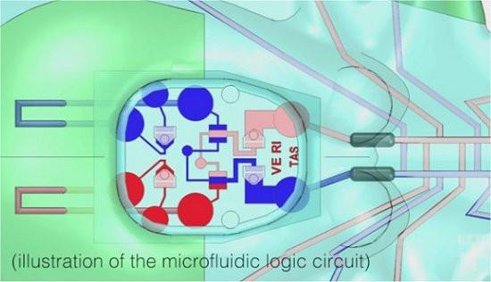 """Esquema do chip microfluídico que faz as vezes de """"cérebro"""" do robô mole autônomo. Em vez de circuitos elétricos, ele é formado por uma sequência de pequenos canos. [Imagem: Lori Sanders]"""