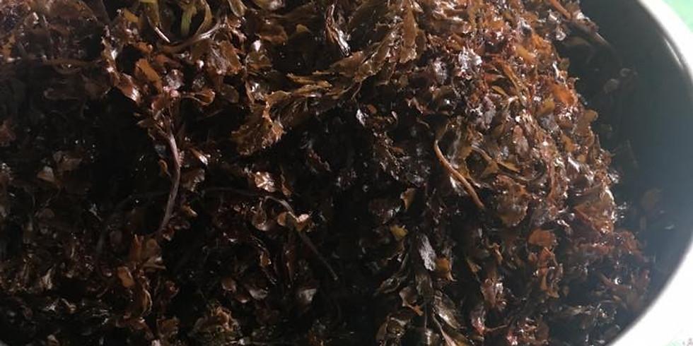 【第一屆藝術進駐】2020/04/12 海鹽生態教育工作坊-正港海口味